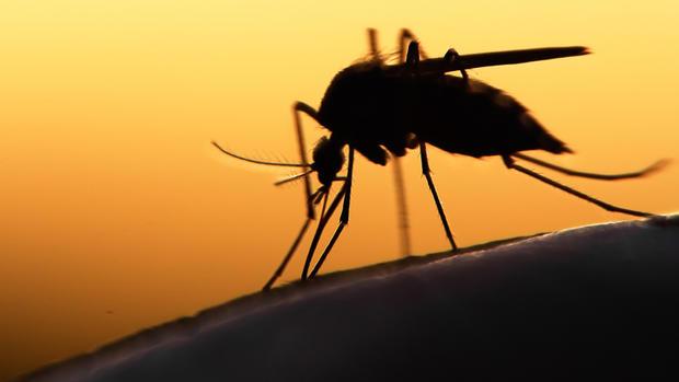 La moitié du continent américain sous la menace de la dengue, du chikungunya et du Zika