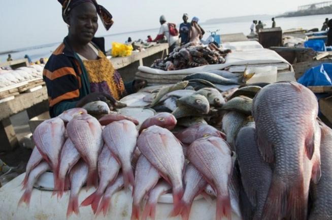 Exportation de farine de poisson : Greenpeace dénonce cette pratique