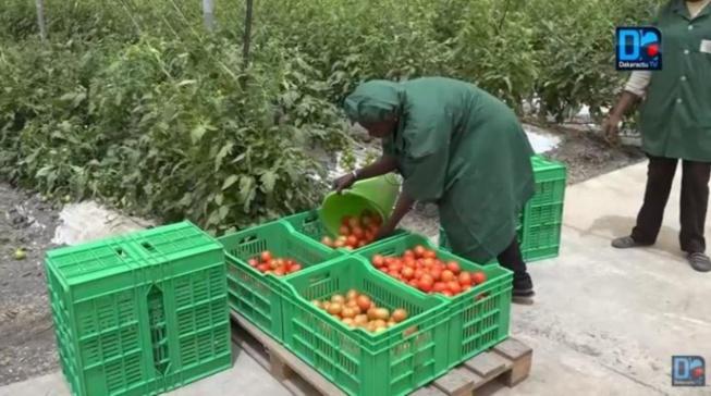 Domaine agricole de Keur Momar Sarr: l'Etat relance le projet après 2 ans d'arrêt