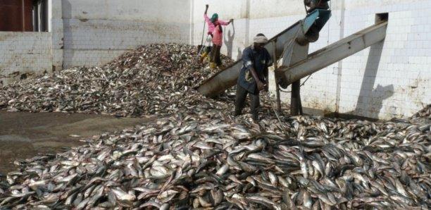 Farine de poisson : Un casse-tête à Dakar pour l'État