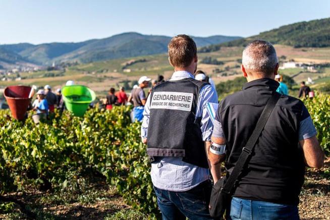 France: Un réseau qui exploitait une centaine de vendangeurs bulgares démantelé