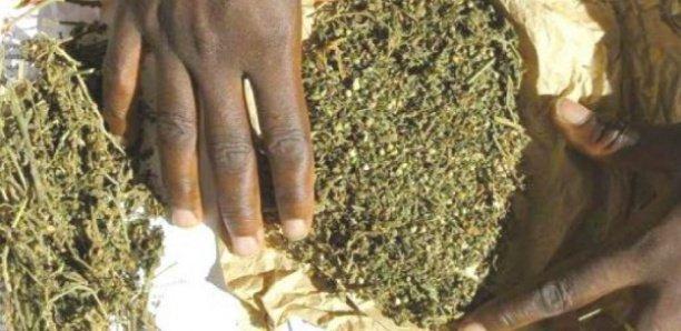 Tambacounda : L'OCRTIS arrête des trafiquants de drogue dont une vieille de 62 ans