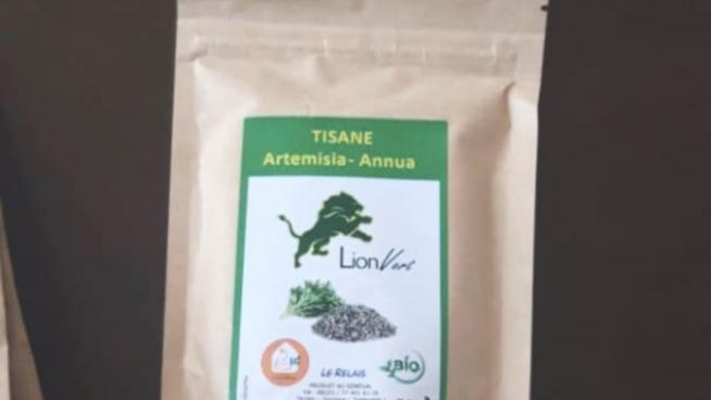 Covid-19 : Sénégal: Voici les premières nouvelles sur la recherche de l'Artémisia, la tisane salvatrice