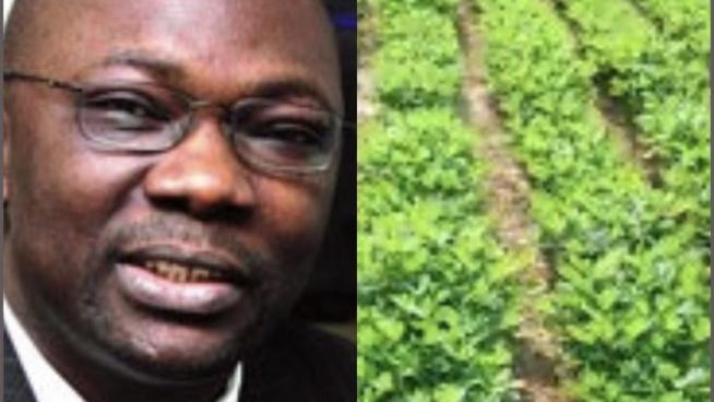 Le journaliste Mbaye Thiandoum sur les 90H.a de Miessa Ngom à Sindia « le Conseil rural de Sindia ne s'est jamais réuni pour délibérer sur ces 90h »