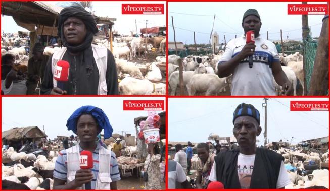 Les moutons les plus chers pour la Tabaski reportage dans les darals de Dakar