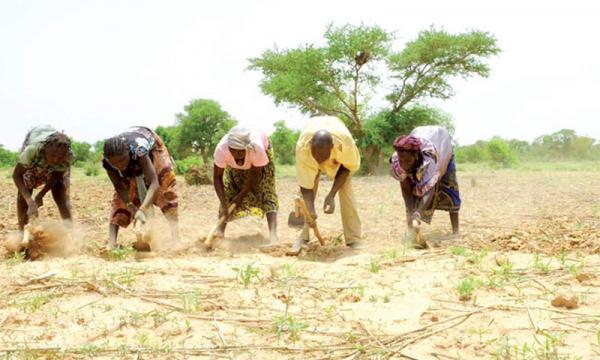 Médiation: Les paysans de Ndingler rejettent la proposition de Babacar Ngom