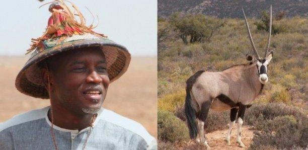Reserve de « Kilim » : Aly Ngouille a reçu trois gazelles (1 mâle et 2 femelles)