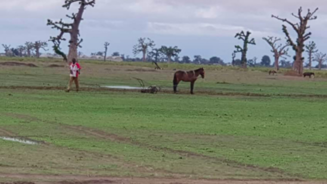 Arrêt sur images/Ndingler : Les paysans de retour sur leurs champs
