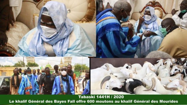 Tabaski 2020 : Le khalife des Bayes Fall offre 600 moutons à Serigne Mountakha…