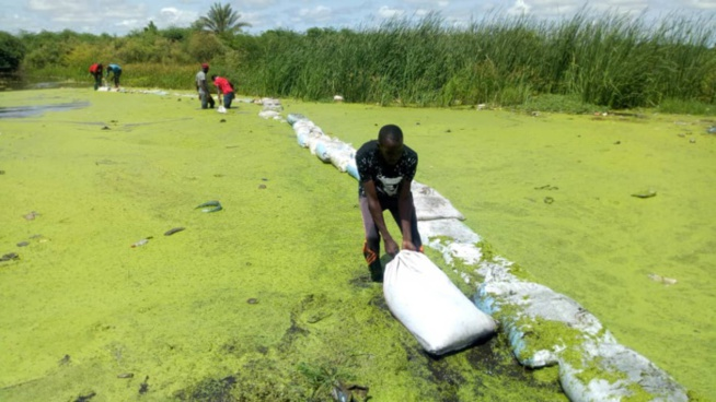 Inondations : Le calvaire quotidien des populations de la Cité Mame Alpha Mayoro Wéllé de la commune de Gaë.