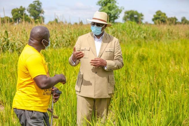 Macky Sall à Keur Socé: Visite des champs de la COPAR de 8 500 ha