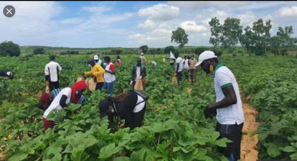 Vacances agricoles: Ousmane Sonko attendu à Louga demain jeudi