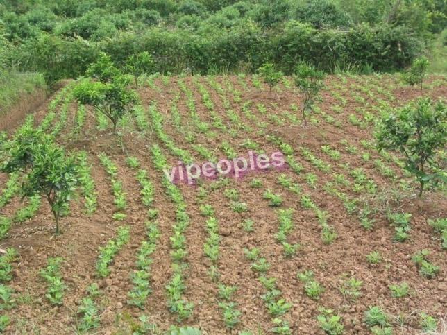 Agriculture : « Les chasseurs de terres fertiles », un danger pour l'agriculture paysanne sénégalaise Par Serigne Mor Gaye