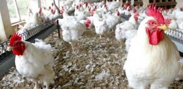 Korité 2021: Les prix flambent, un million de poulets manquent à l'appel
