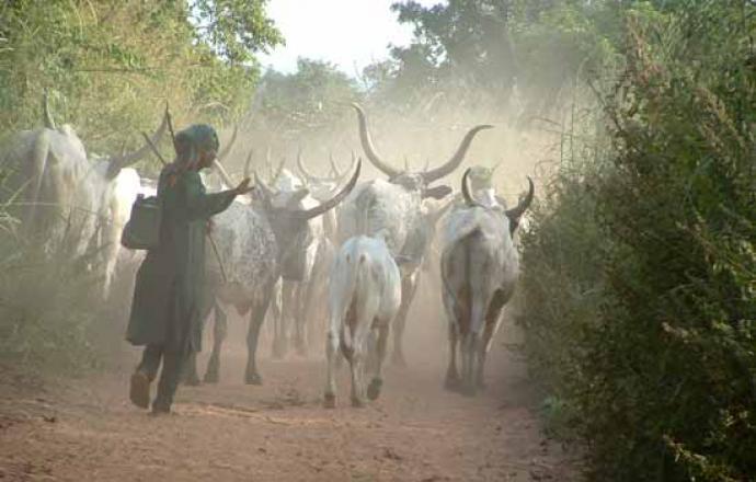 Pour avoir dévasté un jardin avec son troupeau : Un berger peulh et deux paysans s'échangent des coups de coupe-coupe
