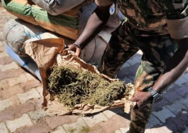 Trafic intérieur de drogue: Ibrahima Diouf risque 10 ans de réclusion criminelle