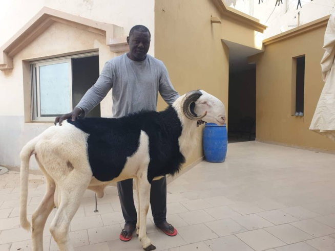 Balla Gaye 2 offre un ladoume de3.500.000f à père Tapha Gueye