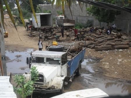 Les Chinois pillent la forêt Casamançaise
