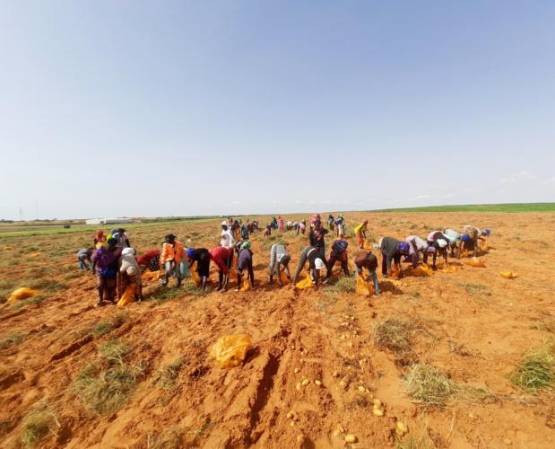 Renforcement des productions agricoles : Trade Hub octroie une subvention de 623 millions FCFA à la société Agro Boye