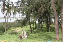 ZIGUINCHOR - Protection des écosystèmes : La nouvelle gouvernance verte mise en branle