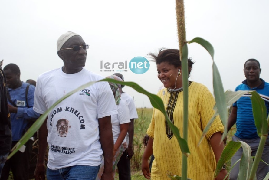 Khelcom 2013 - Les images du moissonnage des champs de mil: Cheikh Amar, Kader Ndiaye, Abdoulaye Lam, Sister Maria en action