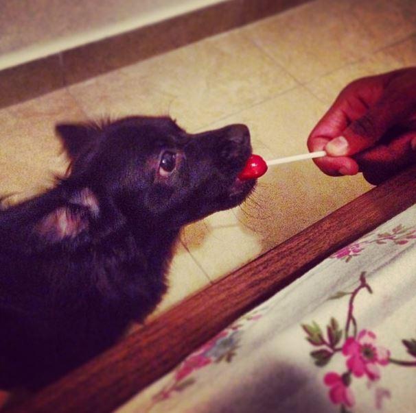 [PHOTOS] Ibou Kara Mbacké et sa femme Léa Mbacké s'offrent un petit chien !