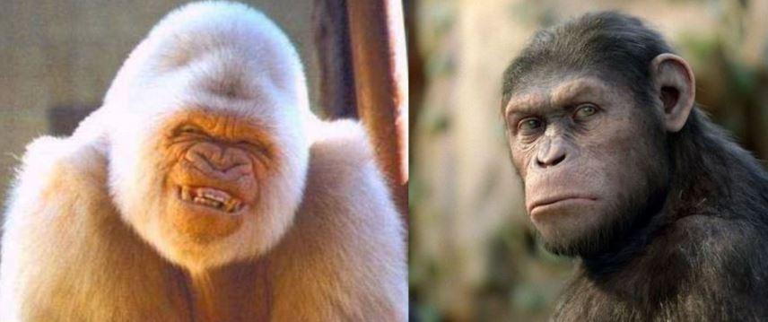 Une de Minute pour Taubira: Sinon il y a le singe blanc et le singe noir