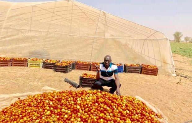 Découvrez comment Aly Ngouille, passe ses vacances, Le ministre expose les récoltes de sa ferme agricole