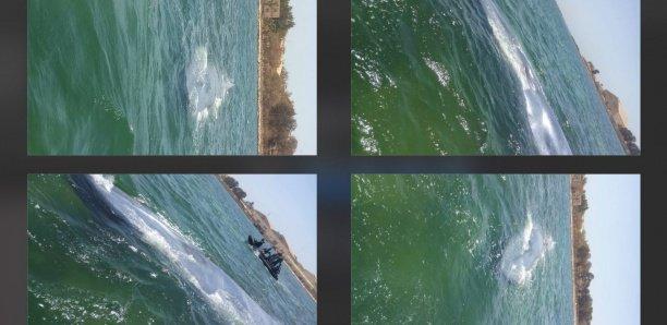 Camp de Bel Air : Les images du sauvetage de la baleine qui s'était échouée
