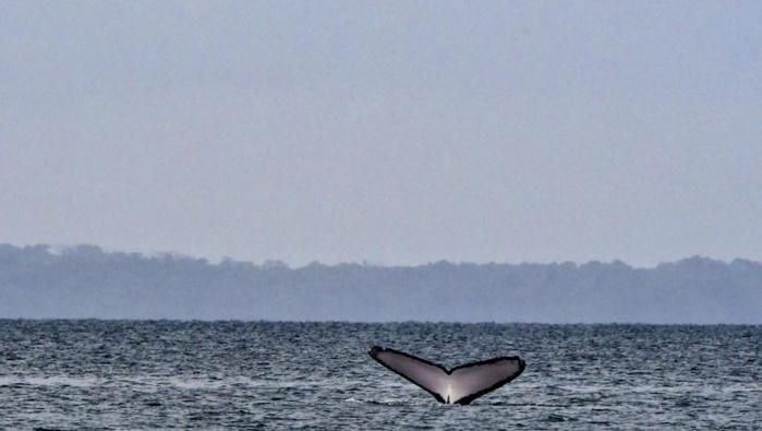 G7: La protection des océans au menu des discussions de la journée