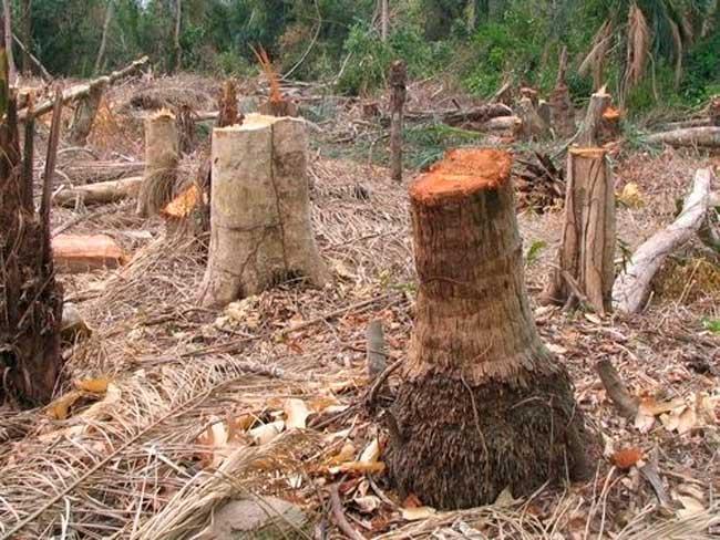 Kolda: Un exploitant forestier tue son épouse âgée de 17 ans