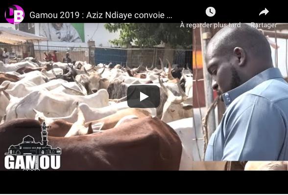 VIDEO - Gamou 2019: Aziz Ndiaye convoie un troupeau de bœufs à Tivaouane