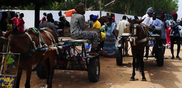 Gamou : Les charretiers indésirables à Tivaouane