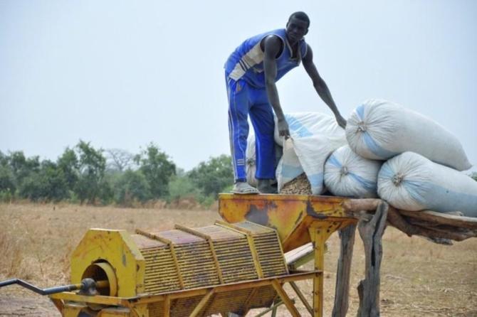 Conseil des Ministres- Campagne arachidière : Le prix d'achat au producteur fixé à 210 CFA/kg