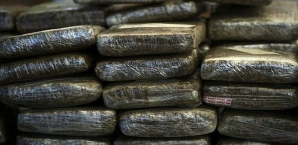 Drogue: La police saisit 41 kilos «Brown» de chanvre indien