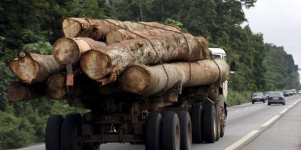 Trafic international de bois en Casamance : saisie de deux camions gambiens