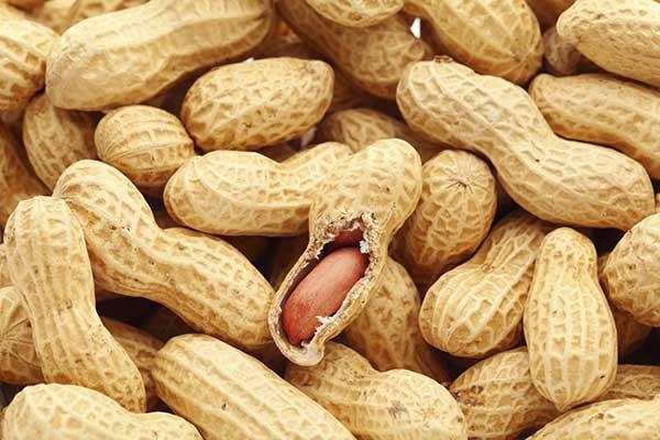 Très mauvais démarrage de la campagne arachidière: la Sonacos Lyndiane sonne l'alerte