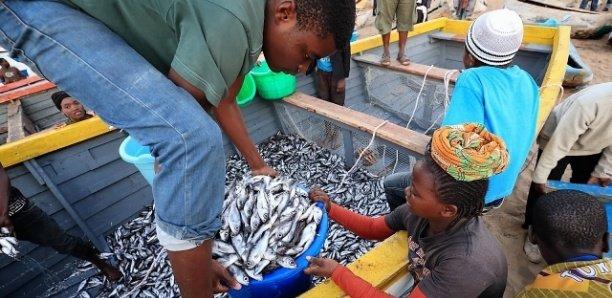 Sénégal : Près d'un million de personnes travaillent dans le secteur de la pêche