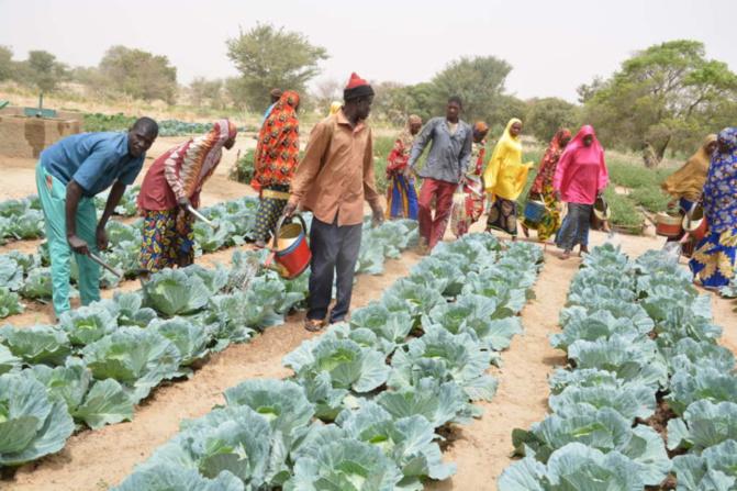 Louga/Front Social : Les agents de l'État du secteur agricole militants du SYNTAS crient leur ras-le-bol