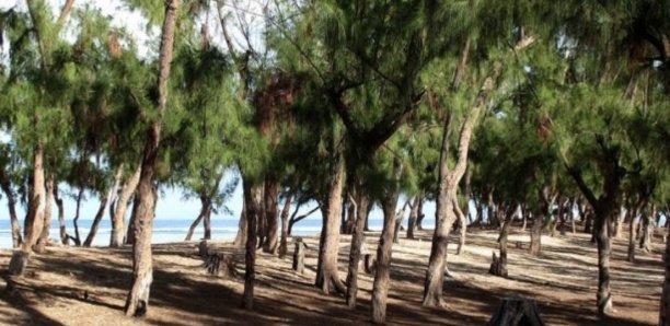 Bradage du Littoral : Vers une déclassification de la zone des filaos de Guédiawaye?