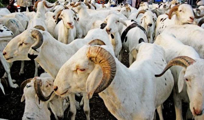Tabaski / Approvisionnement du marché en moutons: Macky Sall exhorte à la facilitation