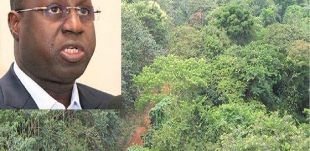 Forêt classée de Mbao : L'Etat n'envisage pas de déclasser un millimètre carré