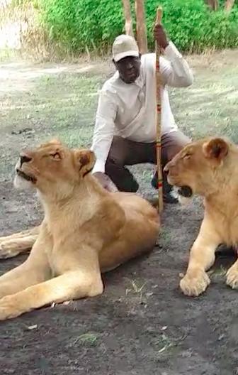 Macky Sall relance le tourisme local avec de vrais lions