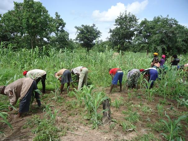 """Impact Covid-19/ ANSD: """" Les agriculteurs sont les moins touchés"""""""