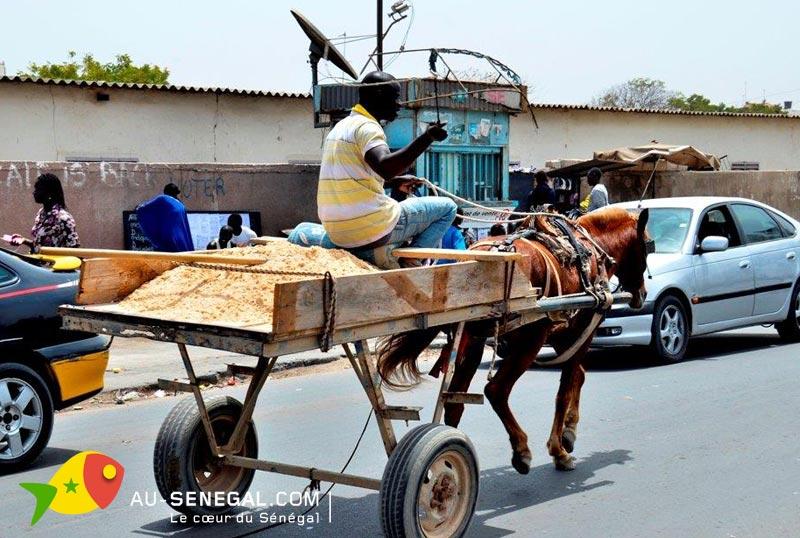 Transport par véhicules à traction animale: l'ONG Brooke et le ministère de l'Elevage pour plus de respects aux animaux
