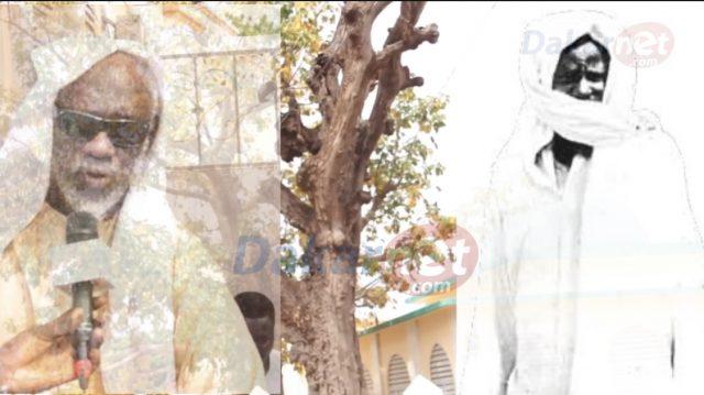 Vidéo Machala histoire inédite : Voici l'unique arbre planté par Serigne touba à Diourbel