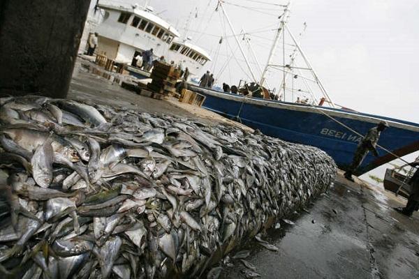 Alerte de Greenpeace: La pêche artisanale verrouillée par la COVID-19, les multinationales de la pêche pillent les océans de l'Afrique de l'Ouest