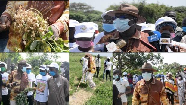 """Mamadou Ndione, Directeur général du COSEC: """"La relance de l'économie sénégalaise passe par la relance agricole"""""""