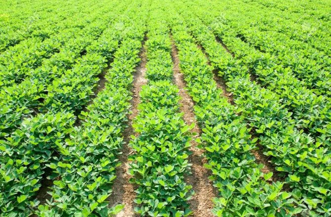 Campagne de commercialisation de la production agricole: Macky Sall presse les ministres de l'Agriculture et du Commerce, pour son démarrage