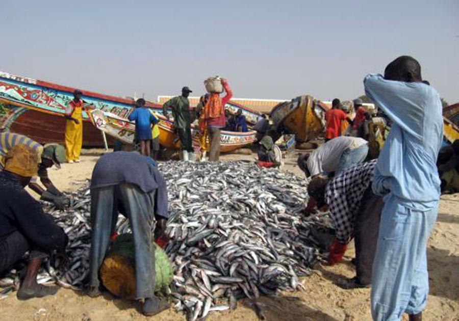 Alternative à l'émigration clandestine : L'Ana poussent les jeunes à la pratique de la pisciculture